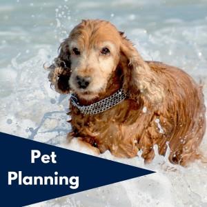 Hartford, CT Pet Planning